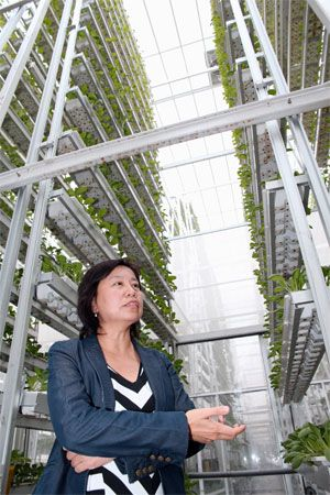 Singapore and Japan are feeding cities with indoor farms. Ong Geok Chwee, chief operating officer of Singapore startup Sky Urban Solutions Holding Pte