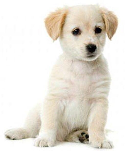 Hond ❤️