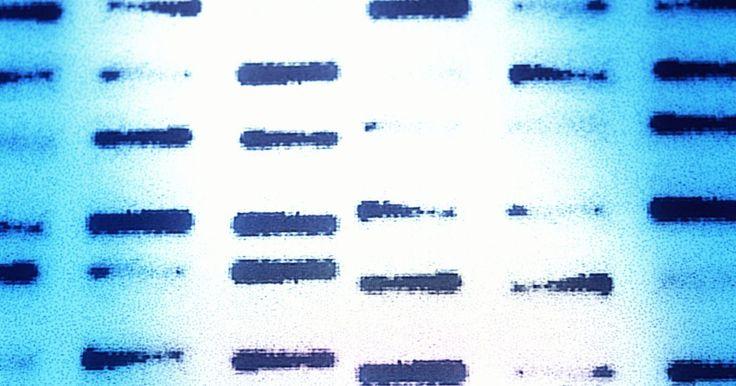 """Como as enzimas de restrição são usadas na biotecnologia?. A indústria biotecnológica usa enzimas de restrição para mapear DNA, além de recortá-lo e emendá-lo para o uso na engenharia genética. Encontrada em bactérias, uma enzima de restrição reconhece e se liga a uma parte específica da sequência de DNA e, então, quebra a estrutura da dupla hélice. As pontas desiguais ou """"grudentas"""" que se formam nesse ..."""