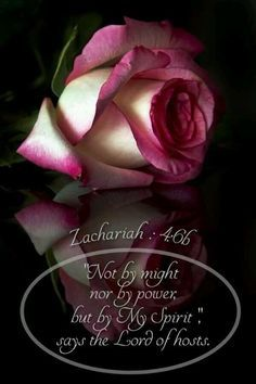 'Not by might nor by power, but by my Spirit,' says the Lord of hosts. Zachariah 4:6 #bible #qoutes #godislove