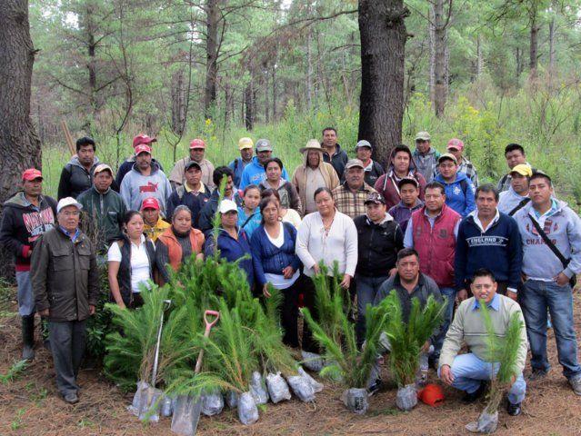En Tetlanohcan inician campaña de reforestación        San Francisco Tetlanohcan, Tlax., 30 de septiembre de 2014.- Acompañados por ciudadanos del municipio de Tetlanohcan, el pasado fin de semana autoridades municipales iniciaron la campaña de reforestación en las faldas de la Malinche en beneficio del medio ambiente.