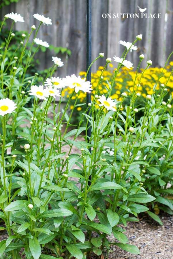 Hardy Plants | The DIY Gardener's Guide | On Sutton Place