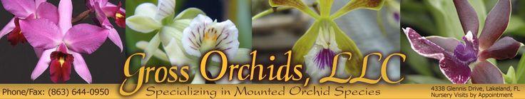 Mounted Orchid Species, Lakeland, Florida, Nursery