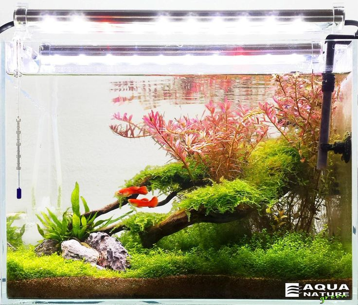 ... about fishbowl,fish tank on Pinterest Java, Aquaponics and Aga