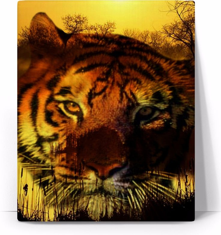Check out my new product https://www.rageon.com/products/tiger-face-art-canvas-print?aff=BWeX on RageOn!