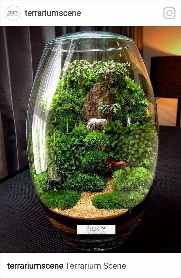 25 Best Ideas About Terrarium On Pinterest Terrarium
