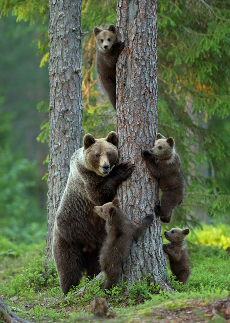 Animais selvagens #animals #bears