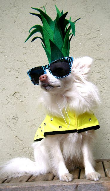 Sew DoggyStyle: diy dog pineapple costume