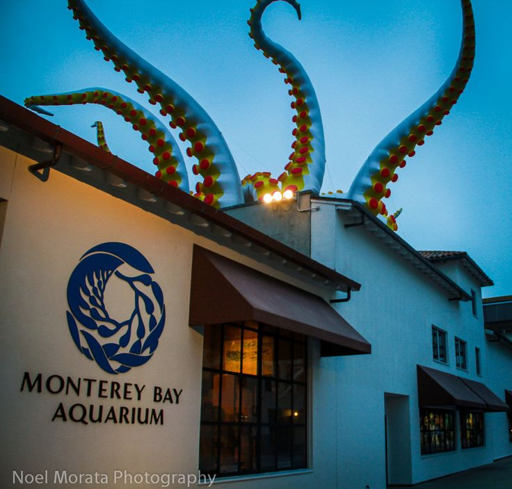 Tentacles on parade at the Monterey Bay Aquarium #monterey #aquarium #california