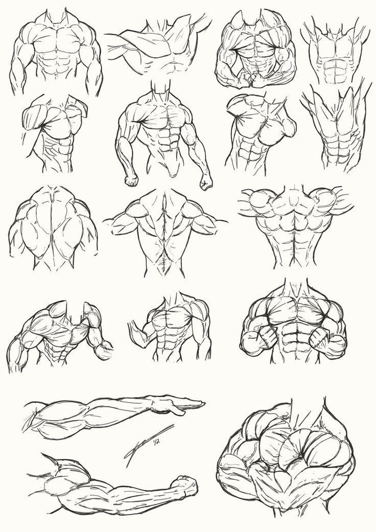 Buen día a todosles dejo unas referencias anatómicas del torso masculino musculoso siempre es bueno repasar antes de dibujar ;) - @lmv01