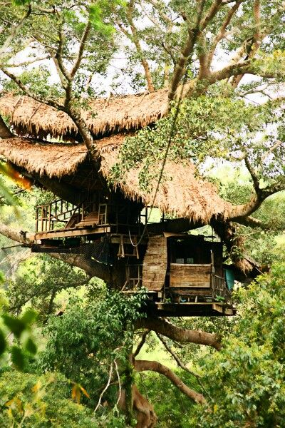 A very romanticTree house / The Green Life <3