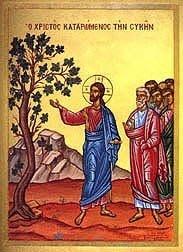Holy Monday, Jesus curses the fig tree..