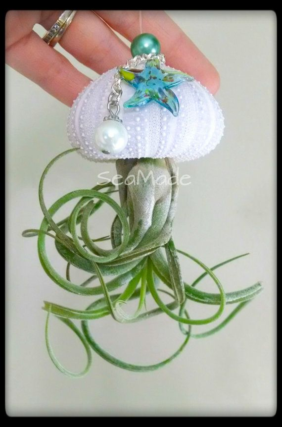 Shellyfish  PURPLE sea urchin shell and air plant by SeaMadeCrafts