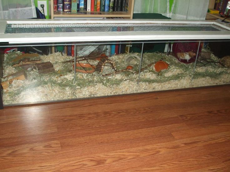 Ikea detolf as hamster cage petits animaux pinterest for How to make a diy hamster cage