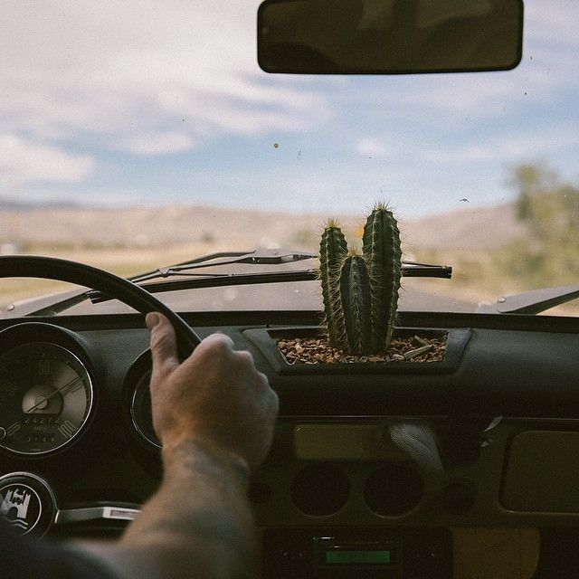 So cute...but I would be the one to get in an accident and that cactus would fly at my face