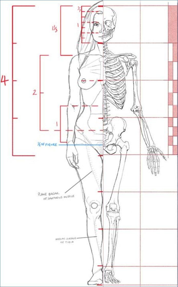 223 besten anatomy Bilder auf Pinterest | Anatomieverweis, Gesichter ...