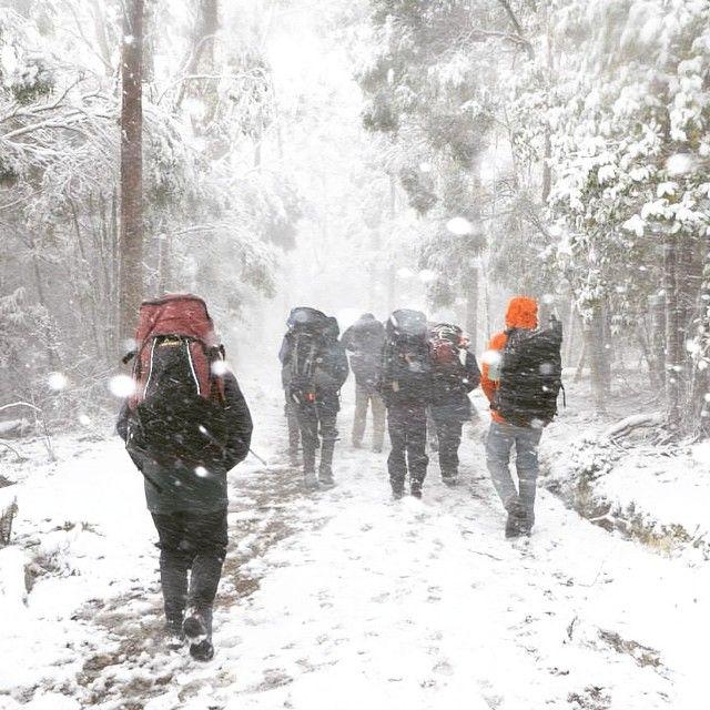 Walking in Winter with the snow via https://instagram.com/p/2gL1rKg5J5?utm_content=buffere6432&utm_medium=social&utm_source=pinterest.com&utm_campaign=buffer #Tasmania