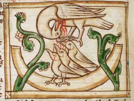 Il pellicano che nutre col proprio sangue la nidiata: uno degli equivoci etologici dei Bestiari medievali. Impiegato come simbolo anche nell'alchimia, l'ars regia. (Bird detail from medieval illuminated manuscript, British Library Harley MS 3244, 1236-c 1250, f54v)