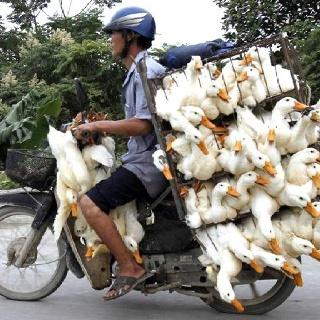 Duck overload!