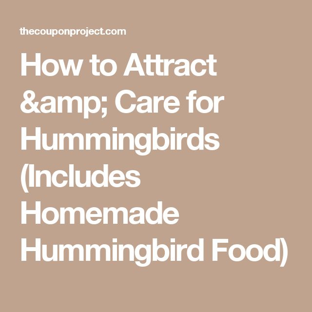 How to Attract & Care for Hummingbirds (Includes Homemade Hummingbird Food)
