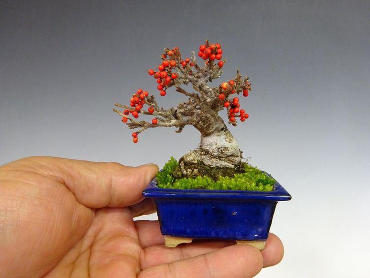 Great little Bonsai, by Katsumi Komiya. #bonsai