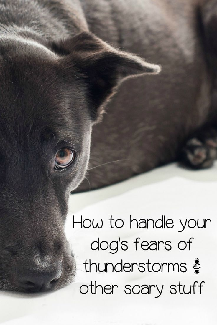Fears in dogs are a common thing, especially when it comes to loud noises like thunder and fireworks. Check out our tips on how to calm your fur baby!