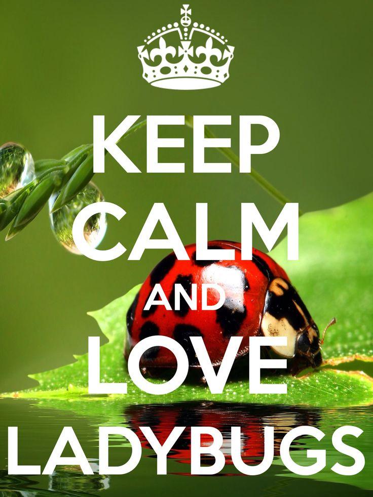KEEP CALM and LOVE LADYBUGS created by IEC