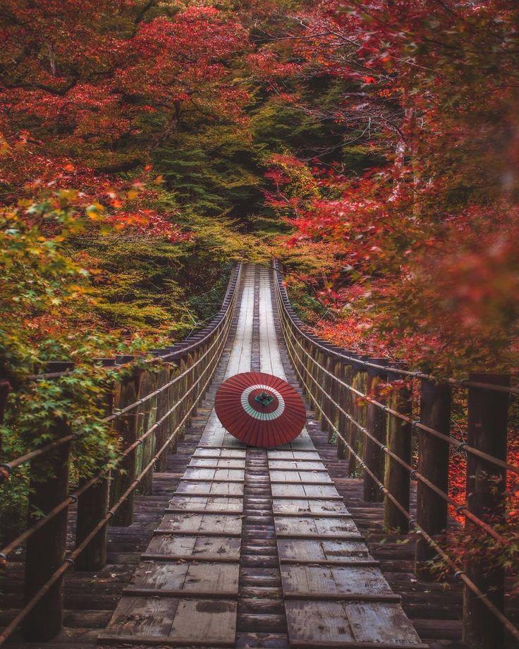 "4,100 Likes, 40 Comments - Takahiro Hosoe(27) (@takaphilography) on Instagram: "". The Autumn in Japan〜紅乱舞 . . 美しき日本の秋。 . . Ibaraki,Japan. . . . . . #tokyocameraclub…"""