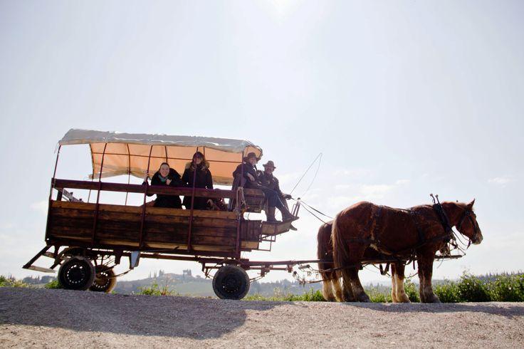 "Fra le attività pomeridiane della scuola, l'imperdibile Tour del Chianti in carrozza del pacchetto ""Scoprendo la Toscana"": http://www.lolivoitaliano.it/it/portfolio/scoprendo-la-toscana/  The tour of Chianti on an old fashion horse-drawn wagon: one our favourite afternoon activities of our our package ""Discovering Tuscany"" http://www.lolivoitaliano.it/en/portfolio/discovering-tuscany/"
