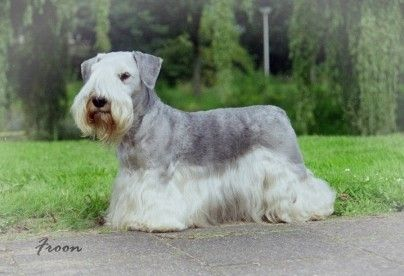 Gresla from the Netherlands Bodasca Kennel