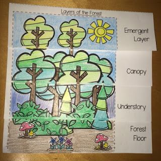 Forest Habitat - Layers of the Forest Flip Book