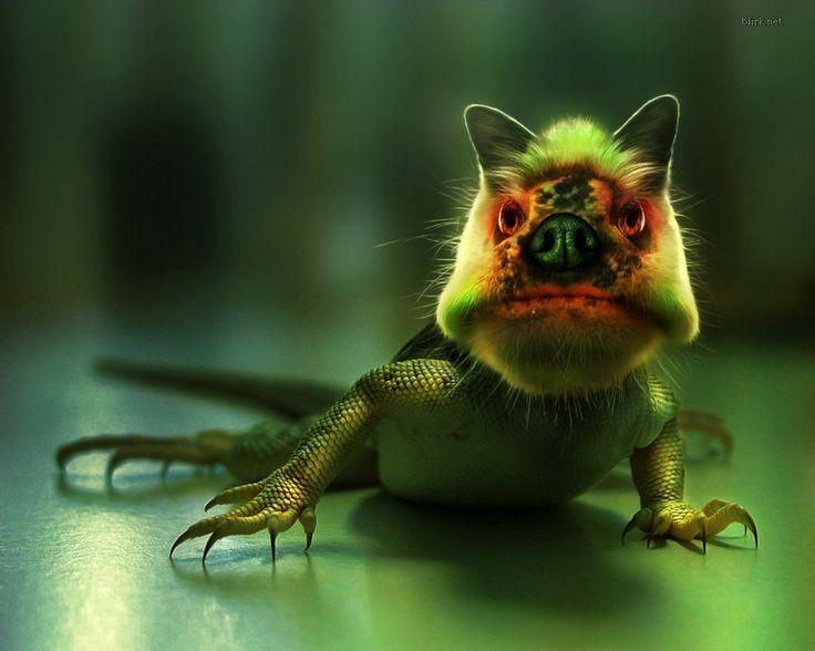 gratis skrivbordsbakgrund - Reptiler: http://wallpapic.se/djur/reptiler/wallpaper-37717