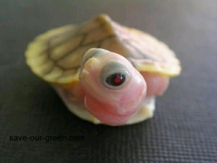 Purple baby turtle ... Cute