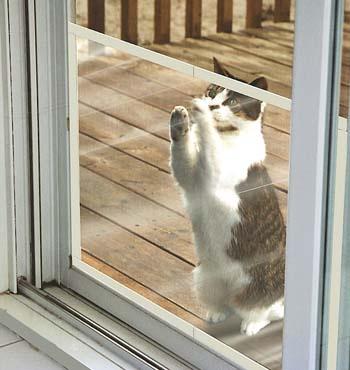 Claws Off™ Patio Screen Door Protector