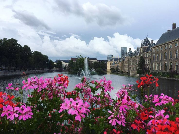 Another week another entry for our 'Summer in Leiden & The Hague' photo competition! Eva Sweep made this beautiful photo at the Hofvijver in The Hague.  Are you a student or employee and do you want to take part in this competition? Send in your summer photograph to fotowedstrijd@leidenuniv.nl and perhaps you'll win one of the Fuji Instax cameras! #universiteitleiden #leidenuniversity #denhaag #hofvijver #flowers #pink #fountain #thehague #parliament #government