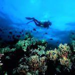 13 lokasi menyelam (diving) terbaik di Indonesia