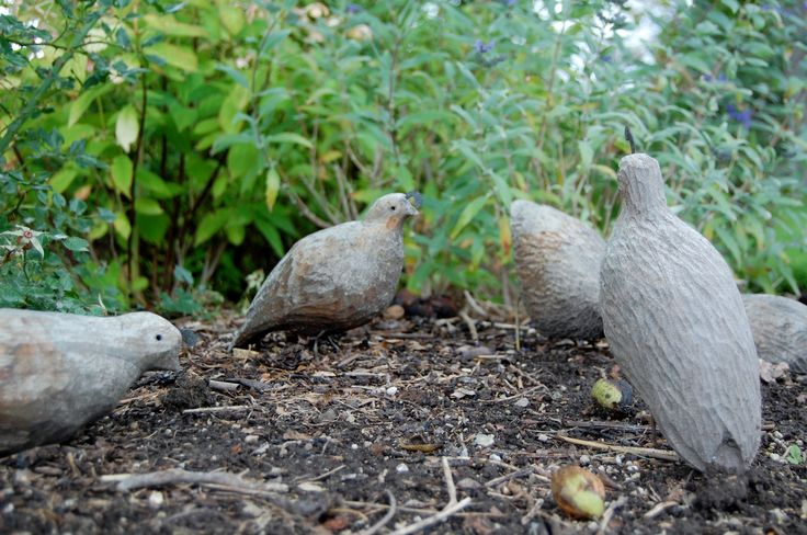 Wooden quail gathering. Artist: Bruce Crawfod, Summerland BC.