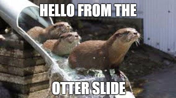 Hello from the otter slide - https://funnystuff.today/hello-otter-slide/
