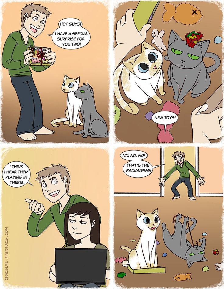 Best ChaosLife Images On Pinterest Comic Strips Funny - 18 hilarious comics that are all too true for cat owners