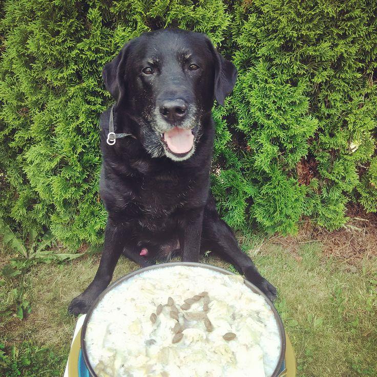 11th birthday of our dog. All the best boy #labrador #birthday #boy #dog #happydog #cake #celebration #petersaccessories