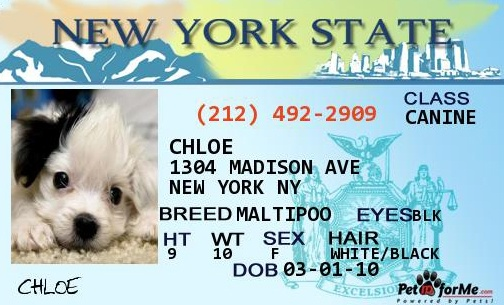 Chloe Can Drive Now Pet Id Tags Pet Id Personalized Pet