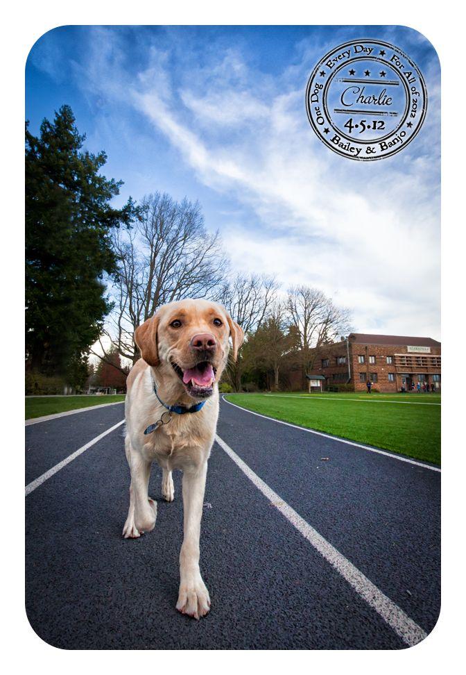 Adopt Dog Western Ma