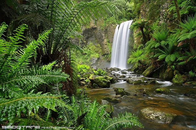 Hopetoun Falls  Otway Ranges, near Beech Forest, Victoria, Australia