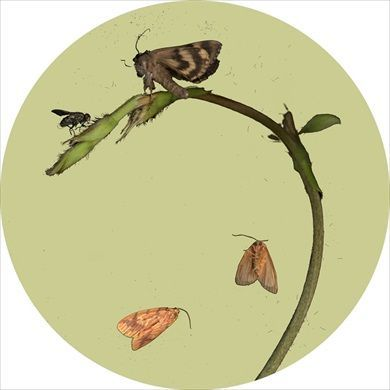 Sandra Kantanen: Untitled (Moth 1), 2014