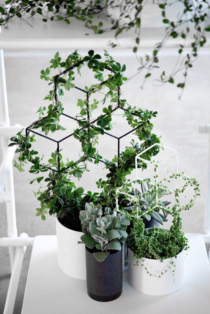 Dekorativ POV planter fra Menu inspireret af den geometriske og populære lysestage pov. Pov planter er en nyfortolkning af de klassiske espalier. Pov planter er perfekt til krukker og til de mange skønne grønne planter der kan slynge sig omkring de flotte grafiske former og er utrolige dekorative.