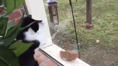 Cat Wants Through