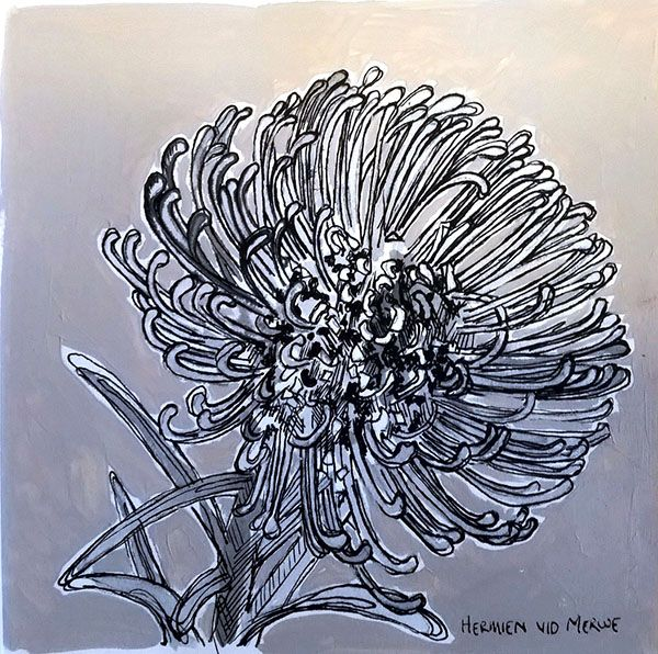 Title: Fynbos:  Table Mountain Fynbos 9 Medium: Pen-and-Ink drawing on paper with oil paint background Size: 200 x 200mm
