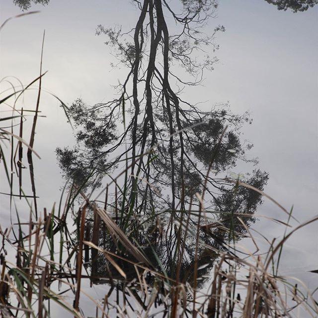 Hunter Valley farm dam. ~ #xplorensw #NewSouthWales #newcastlelifestyle #visitnewcastle #unwindhuntervalley #visithunter #huntervalley #bns_waters #water_captures #Water_Shots #aqua_gallery #hotshotz_water #water_brilliance #water_perfection #igworldclub_h2o #h2o_natura #splendid_reflections #bns_reflection #loves_reflections #igworldclub_reflections #reflection_shotz #tree_captures #tree_magic #tree_brilliance #bd_trees #ic_trees #ig_shotz_trees #lonely_tree_love #pocket_trees…