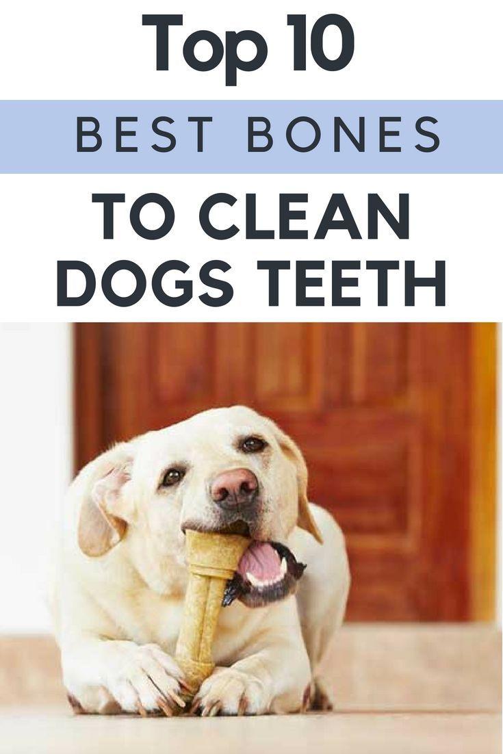 Top 10 Best Bones To Clean Dogs Teeth Dog Teeth Good Bones