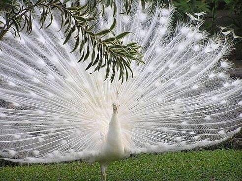 Mejores 38 imágenes de maravillas en Pinterest   Los animales más ...
